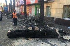 В Хабаровске проводятся санитарные рубки деревьев на улице Карла Маркса