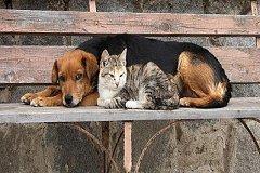 В Комсомольске отлавливаю безнадзорных животных