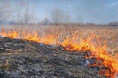 Сухая трава полыхает в Хабаровском крае