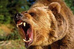 Мужчина получил серьезные травмы после нападения медведя в Хабаровском крае