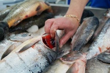«Доступная рыба» снова появится на прилавках в Хабаровском крае