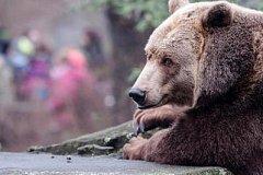 Медведь утащил тело из могилы на кладбище в Комсомольске