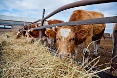 Начинающие фермеры в Хабаровском крае получат гранты по федеральной программе