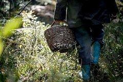 Пропавшего две недели назад грибника не могут найти в Хабаровском крае