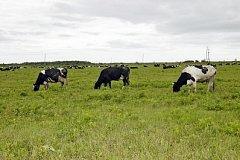 Владельцы «дальневосточных гектаров» получили почти 400 млн рублей помощи
