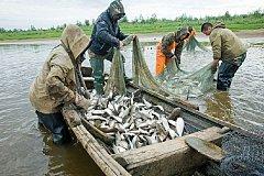 Рыбопромышленнный сектор Хабаровского края продолжает лихорадить
