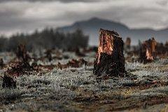 Экологический активист: «В Хабаровском крае скоро вместо леса пустыня будет»