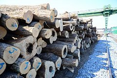 Кризис в лесной отрасли Хабаровского края достиг апогея