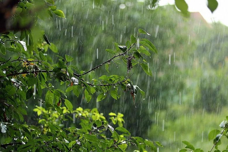 Дождливая погода задержится в Хабаровском крае фото 2
