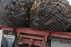 В Хабаровском крае резидент свободного порта начал заготовку ценных водорослей