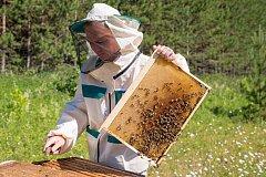 Хабаровские пчеловоды получат государственную поддержку