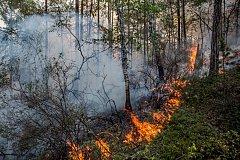 Пять лесных пожаров зафиксированы в Хабаровском крае