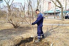 В Хабаровске подготовлен план посадок на следующий год