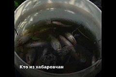 Кто из хабаровчан не любит рыбалку?
